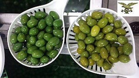 Olive taggiasche: perché si chiamano così e produzione