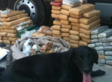 """Brasile: """"Boss"""", il cane antidroga che ha una taglia sulla sua testa!"""