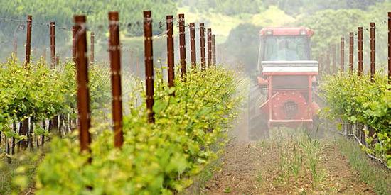 01_pesticidi-vino-altroconsumo