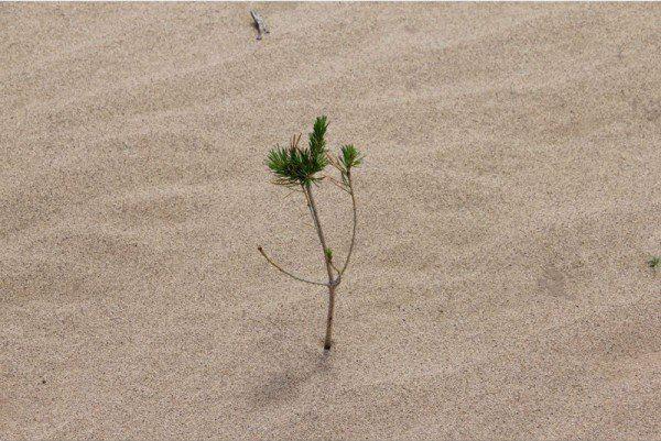 donna_alberi_2