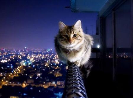 Gatti: il loro cervello è superiore a quello umano?