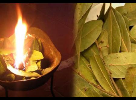 Foglie di alloro: bruciale così per goderne i benefici