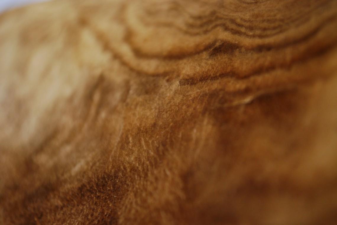 Eliminare il fungo dalle foreste significa anche contribuire al benessere degli alberi