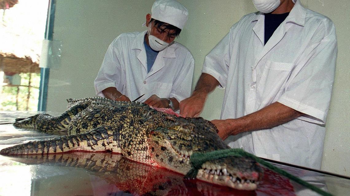 coccodrillo-macellato