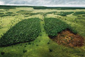 La Norvegia diventa il primo paese del mondo a vietare la deforestazione