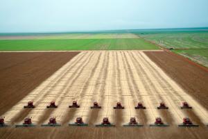 Cos'è il land grabbing, il fenomeno di accaparramento delle terre che sta distruggendo il pianeta