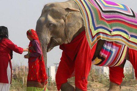 LE DONNE INDIANE CHE CREANO MAGLIONI PER PROTEGGERE GLI ELEFANTI DAL FREDDO ANOMALO (FOTO)