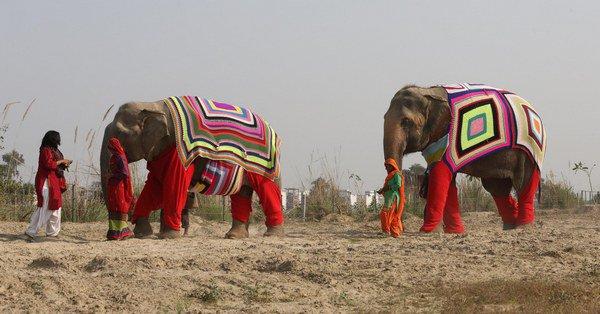 elefanti_india_8