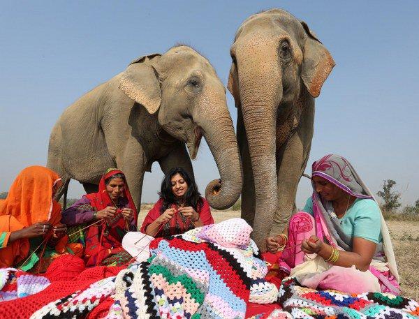 elefanti_india_9