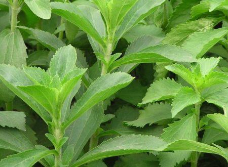 Questa pianta può aiutarti a smettere di fumare ed evitare l'alcol.