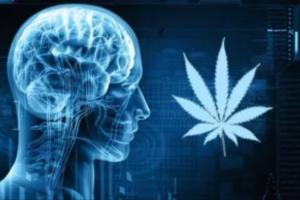 Cancro al cervello: con Thc e Cbd la sopravvivenza dei pazienti aumenta del 30%