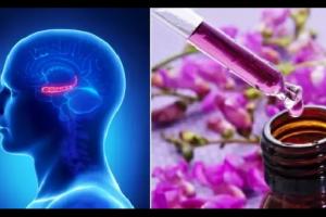 Attacchi di Panico e Ansia – Ecco il trattamento naturale efficace