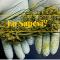 Aspetti positivi della Cannabis.