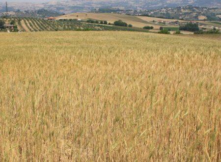Sui monti dell'Irpinia torna la risciola, il grano del '500