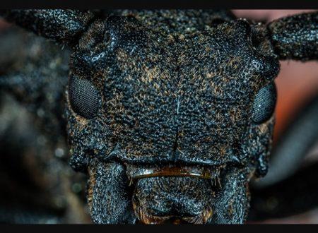 Dal Pentagono, insetti-soldato per devastare le colture modificandole geneticamente. Scienziati: ad alto rischio i test del Darpa