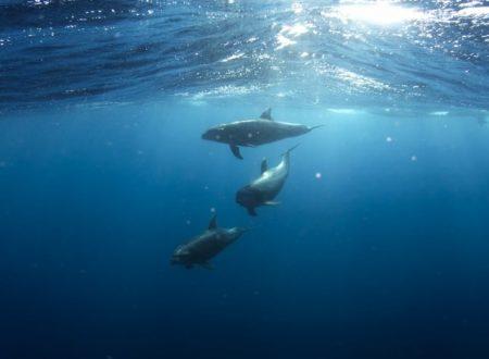 La mattanza dei delfini francesi